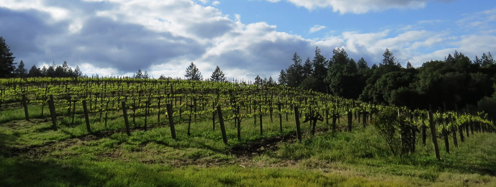 photo-vineyard